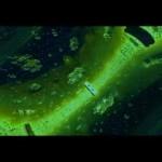 Mr. Green – Bangers (Video)